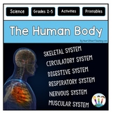 Human Body Systems BUNDLE: Muscular, Skeletal, Digestive, Respiratory & More!