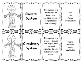 Human Body Systems Card Sort