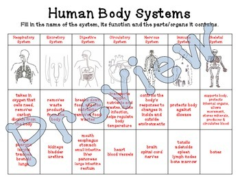 Human Body Systems Chart Function Parts By Sandy S Science Tpt