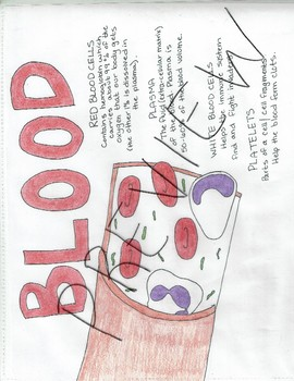 Human Body Systems- Circulatory