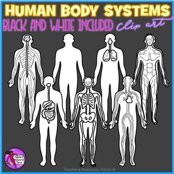 Human Body Systems Clip Art