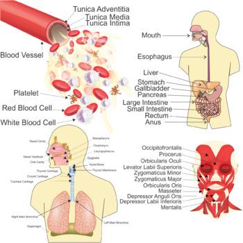 Human Body Systems Clip Art Bundle