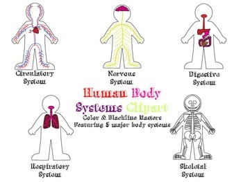 Human Body Systems Clipart for Personal and Commerical Use
