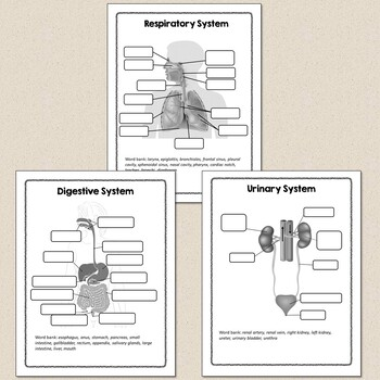Human Body Systems Diagrams for Student Labeling
