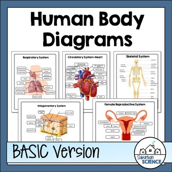 Human Body Systems Diagrams and Worksheets for Student Labeling