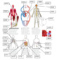 Human Body Systems--Digital Break In Activity