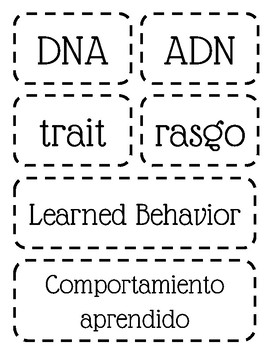 Human Body Systems English & Spanish Word Wall