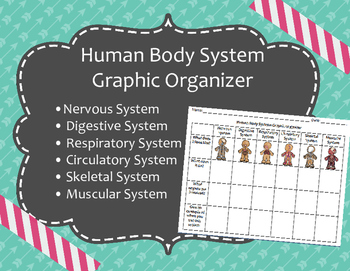 Human Body Systems Graphic Organizer