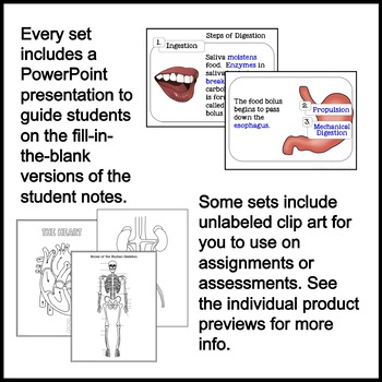 Human Body Systems Guided Graphic Notes GROWING BUNDLE