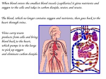 Human Body Systems Lesson