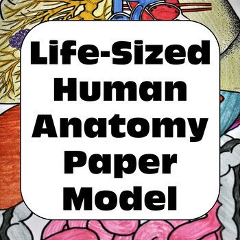Human Body Systems Life-Sized: Digestive, Respiratory, & C