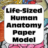 Human Anatomy Life-Sized Human Paper Model Personal Use On