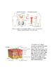 Human Body Systems Match Up