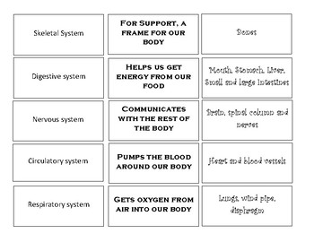 Human Body Systems Matching Game