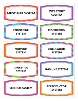 Human Body Systems Memory