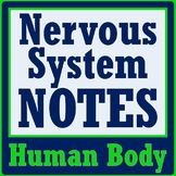 Human Body Systems - Nervous System Notes (middle school) MS-LS1-3