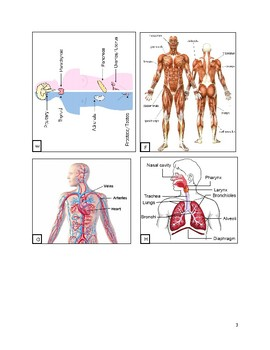 Human Body Systems Organs and Functions