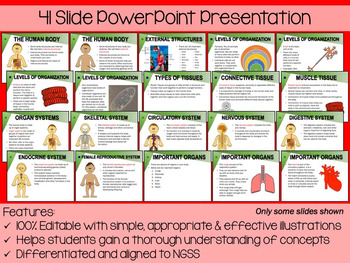 Human Body Systems PowerPoint, Notes & Exam