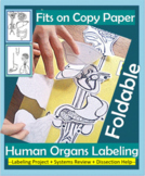 Human Organs Foldable Labeling Project +Dissection Help -Human Body Systems Unit