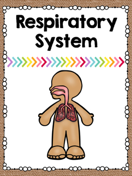 Human Body Systems Posters