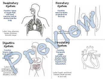 Human Body Systems Review (label & color)