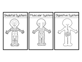 Human Body Systems Foldables