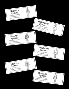 Human Body Systems: Science Vocabulary Word Wall