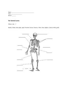 Human Body Systems:  Set of Graphic Organizers