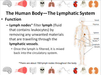 Human Body Systems Powerpoint Slide Show Bundle