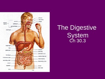Human Body Systems Slideshow