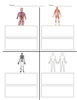 Human Body Systems Sort