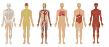 Human Body Systems Test