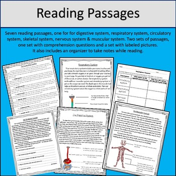 Human Body Systems (Reading Passages, Vocabulary and More)