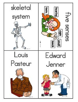 Human Body Systems Vocabulary Word Wall Word Cards for Core Knowledge FREEBIE