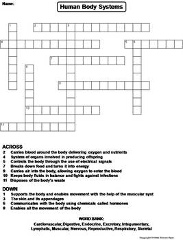 Human Body Systems Worksheet/ Crossword Puzzle