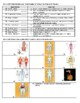 Human Body Systems Worksheet/Review/Test
