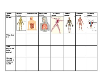 Human Body Systems graphic organizer