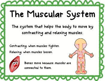 Human Body Systems posters - Primary Grades