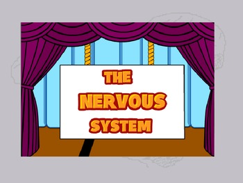 Human Body THE NERVOUS SYSTEM
