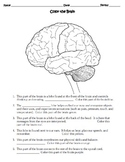 Human Body THE NERVOUS SYSTEM Worksheet