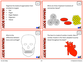 Human Body Task Cards (Differentiated and Tiered)
