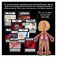 Human Body Systems: Circulatory System - All About Our Heart & Blood