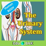 The Human Body Systems – The Urinary System Science PowerPoint Presentation