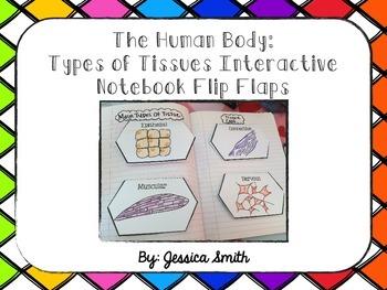 Body Tissue Interactive Notebook