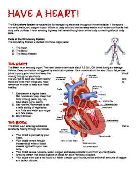 Human Body Unit - FULLY REVISED!
