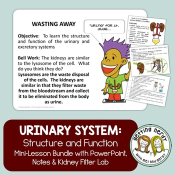 Urinary System - Distance Learning
