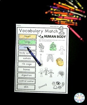Human Body Vocabulary Activities