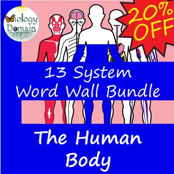 Human Body Word Wall Vocabulary Cards 13 Set Bundle