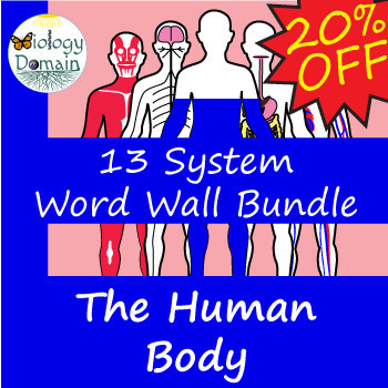 Human Body Vocabulary Cards zip file of 10 sets