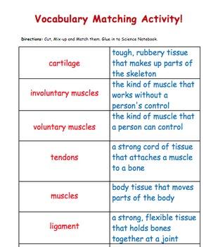 Human Body Vocabulary Match